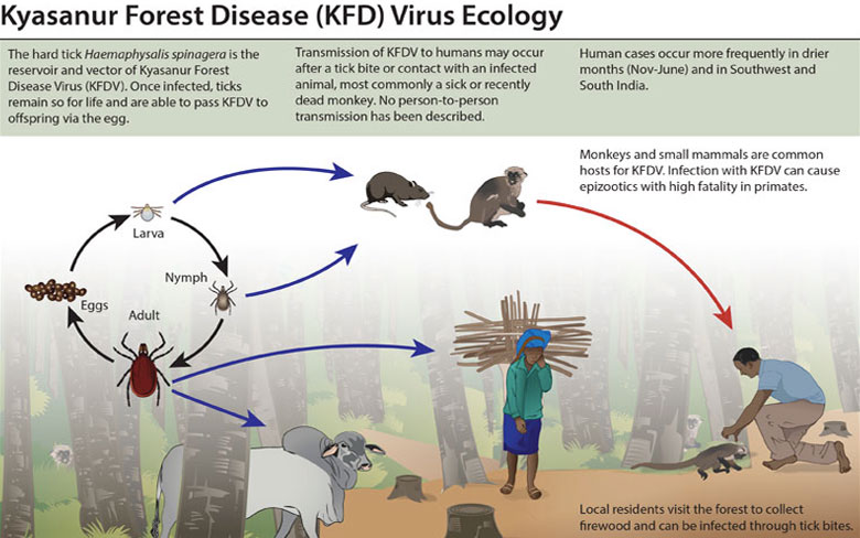 Kyasanur Forest Virus (KFV)