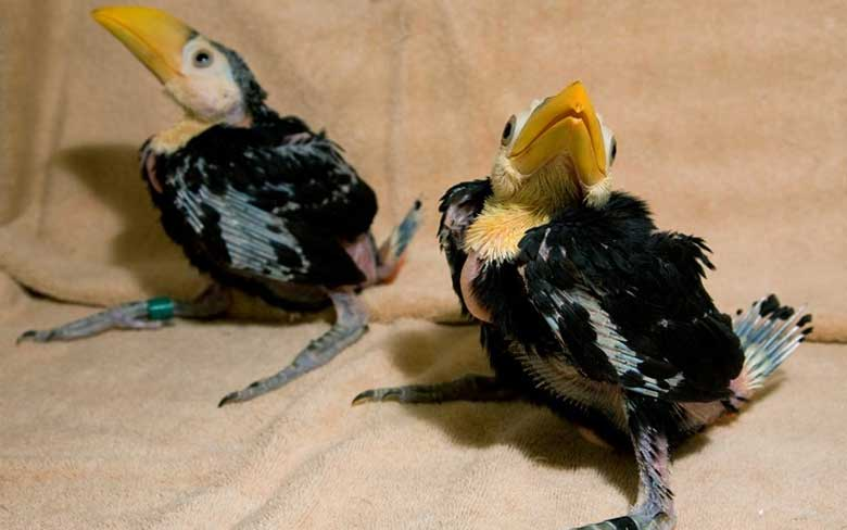 Baby Toucan
