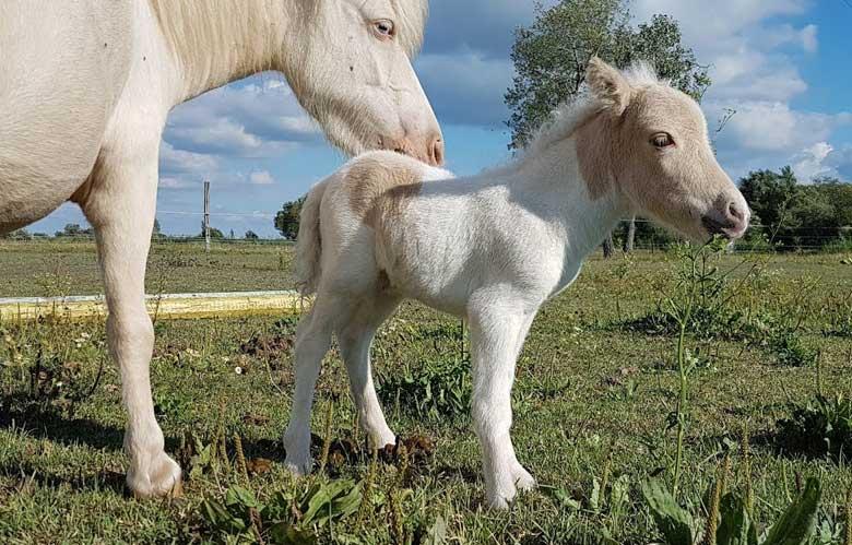 Cute Foal