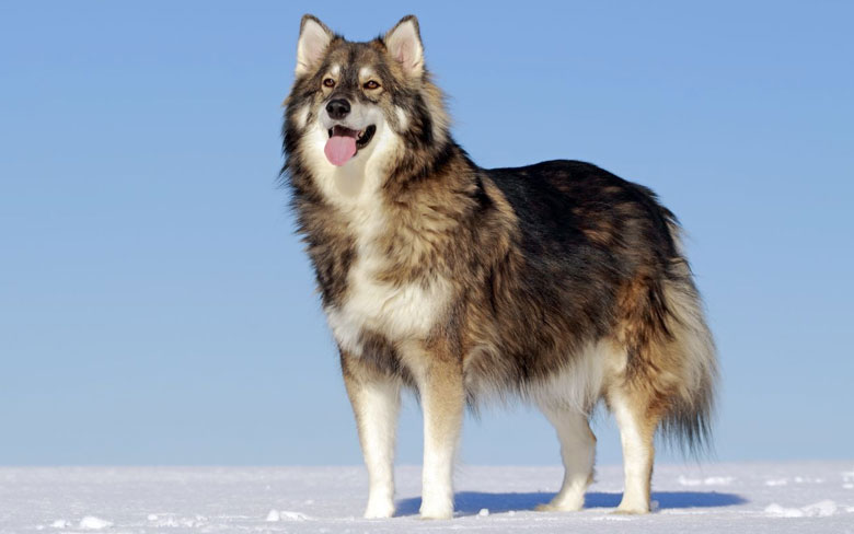 The Utonagan dog