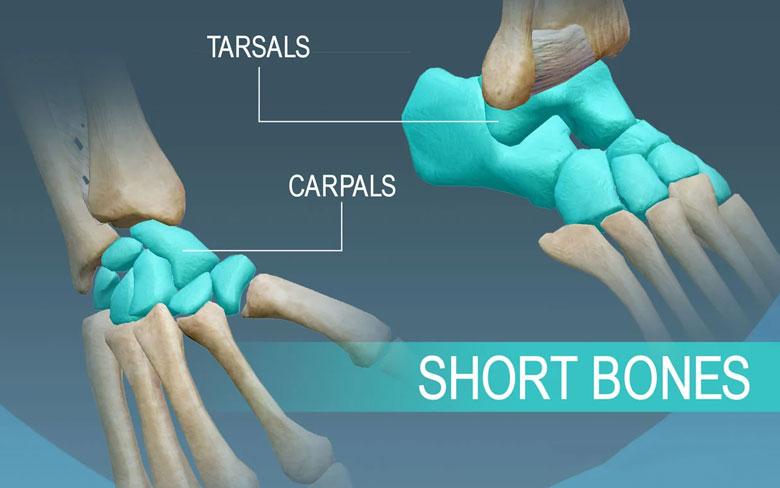 Short Bones