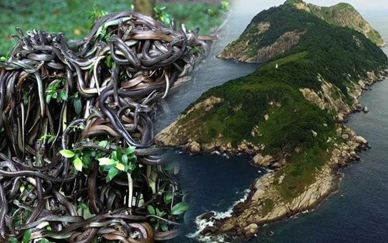 The Snake Island, Brazil